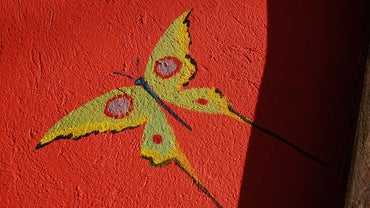 What Are Butterfly Artists?