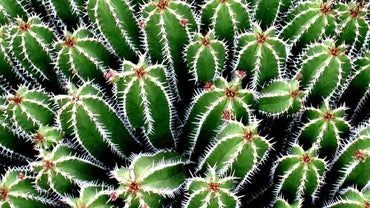 Why Do Cacti Have Needles?