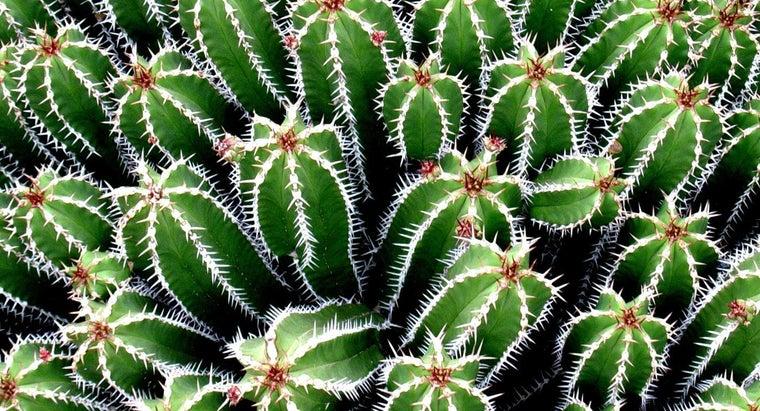 cacti-needles
