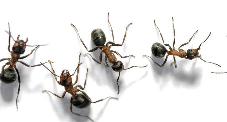 call-group-ants