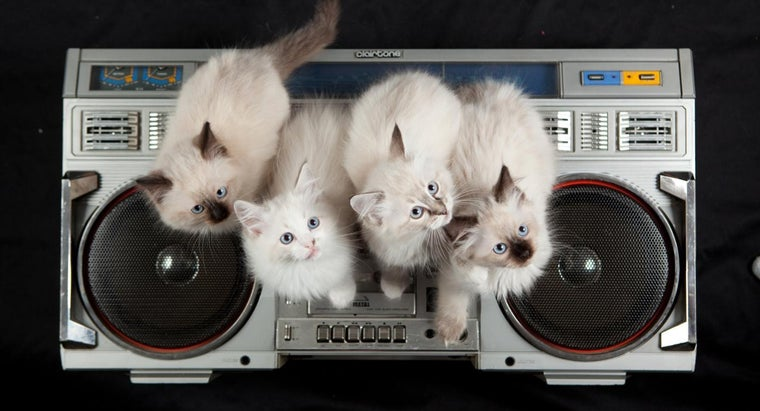 call-group-cats