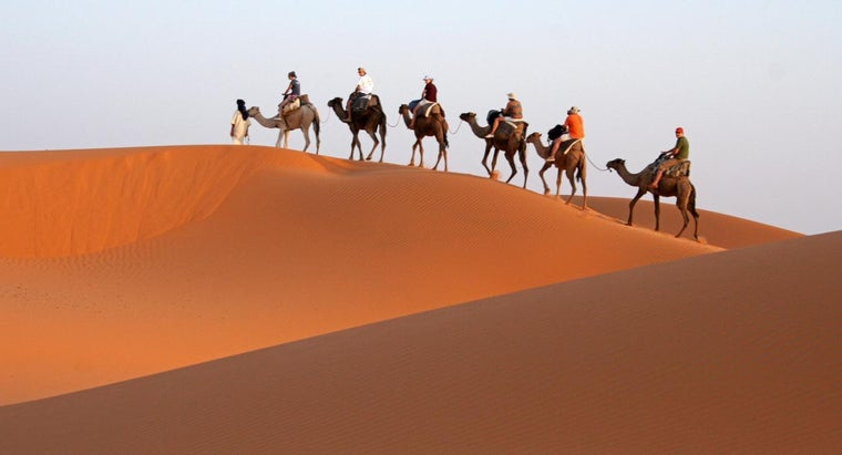 camels-called-ships-desert
