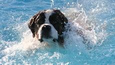 Can All Animals Swim?