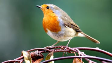 Where Can You Find a Bird Identification Chart Online?