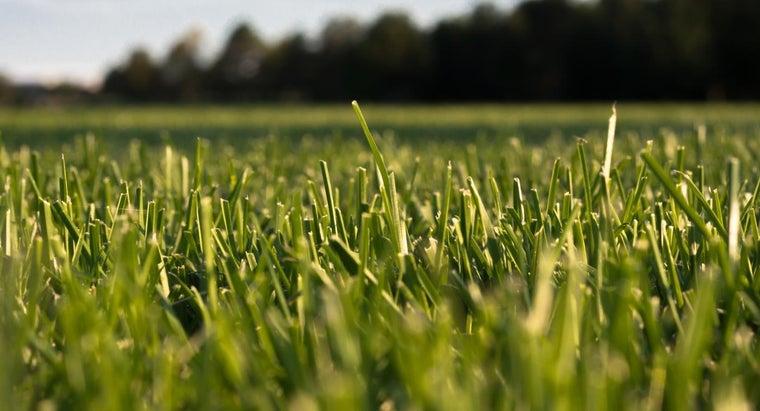 can-buy-lesco-lawn-fertilizer-products