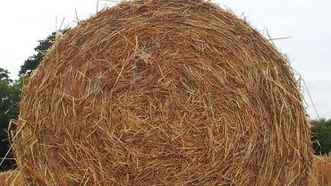 Where Can You Buy Straw Bales?