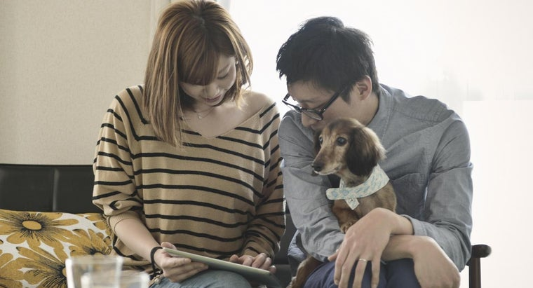 can-buy-teacup-mini-dachshunds