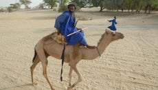 Can Camels Swim?