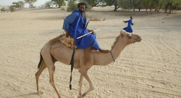 can-camels-swim