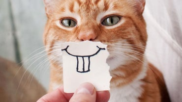Can Cats Smile?