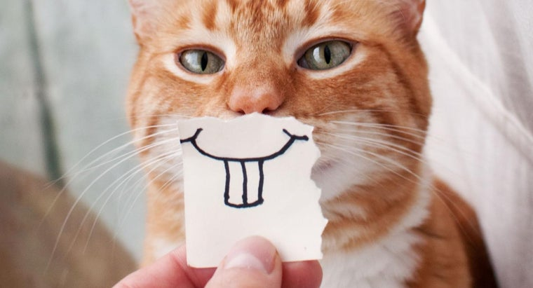 can-cats-smile