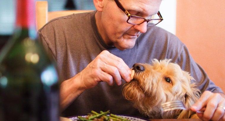 can-convert-dog-years-human-years