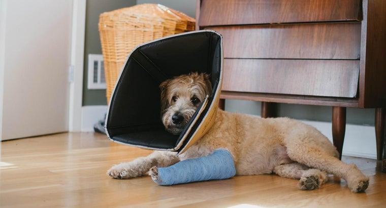 can-dog-s-broken-leg-heal