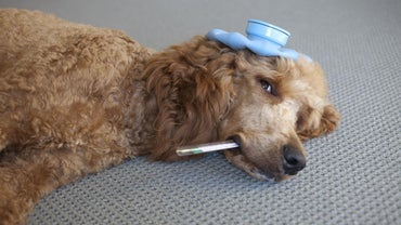 What Can I Do If My Dog Has the Sniffles?