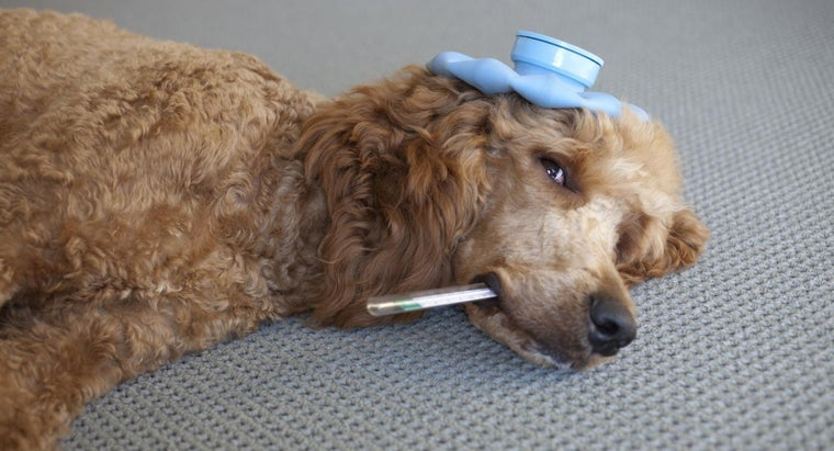 can-dog-sniffles