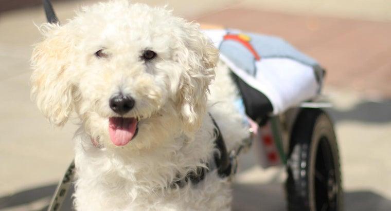 can-doggie-wheelchair