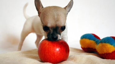Can Dogs Eat Apples?