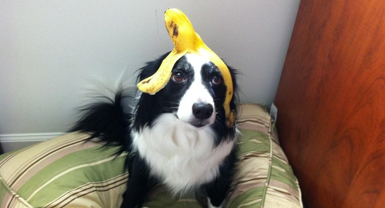 can-dogs-eat-bananas