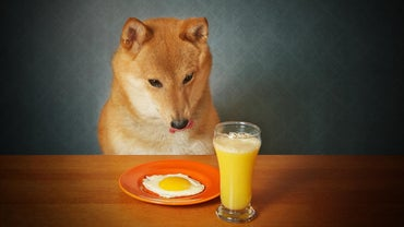 Can Dogs Eat Cooked Eggs?