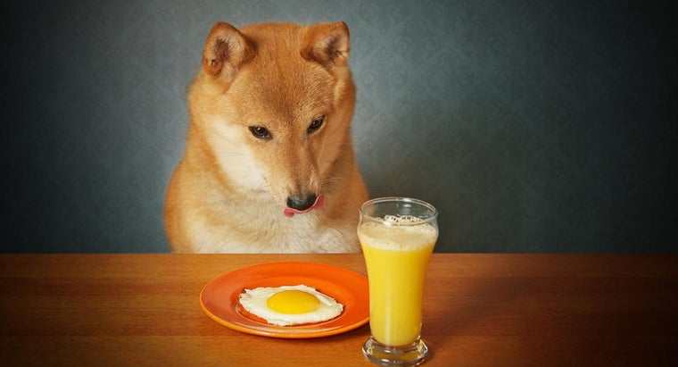 can-dogs-eat-cooked-eggs