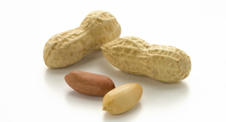 can-dogs-eat-peanuts