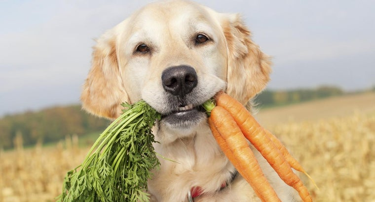 can-dogs-eat-raw-carrots