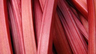 Can You Eat Wild Rhubarb?
