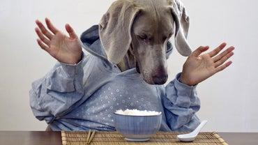 Can I Feed My Dog White Rice?