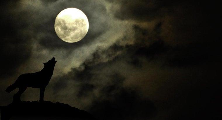 can-folkloric-information-werewolf-spells