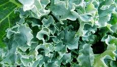 Can You Freeze Kale?