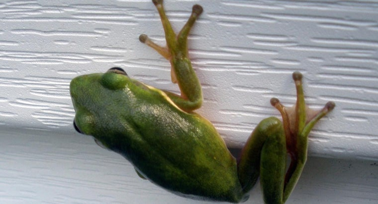 can-frogs-grow-back-lost-limbs