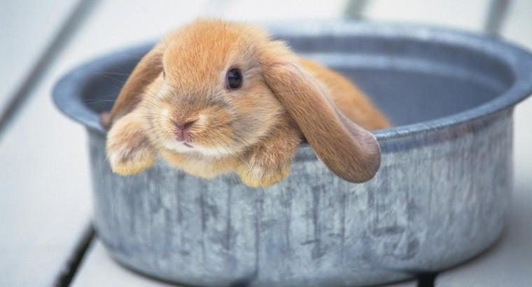 can-give-rabbit-bath