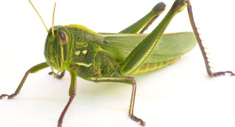 can-grasshopper-s-legs-grow-back