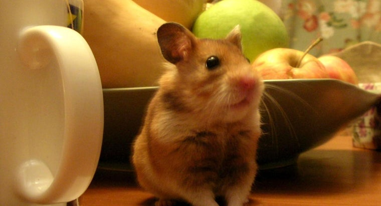 can-hamsters-eat-apples