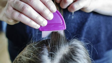 How Can Head Lice and Nits Be Identified?
