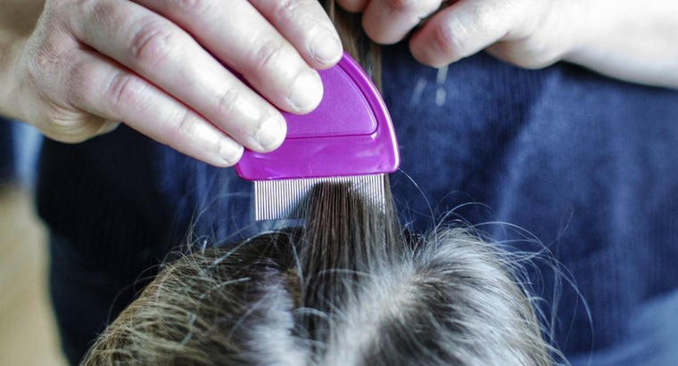 can-head-lice-nits-identified