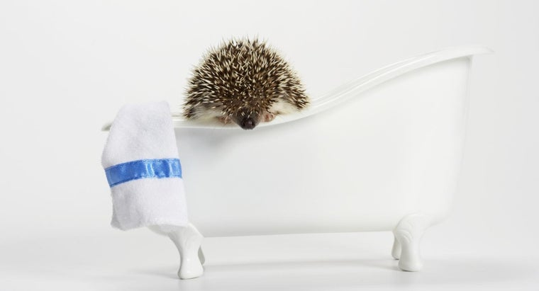 can-hedgehogs-swim