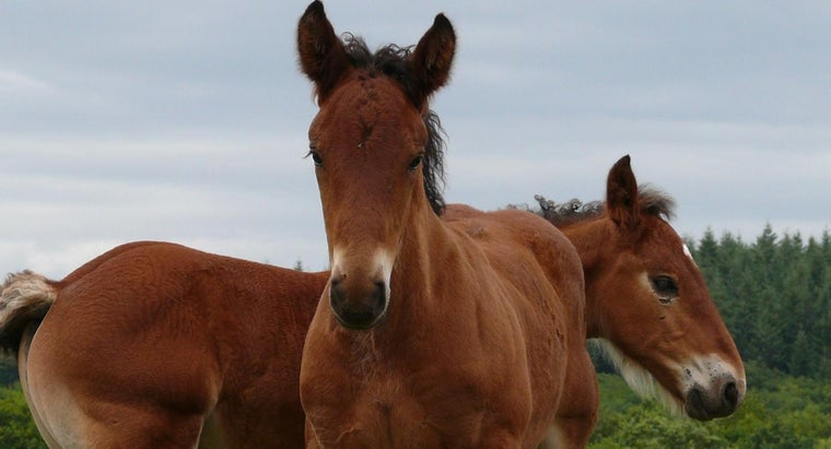 can-horses-see-color