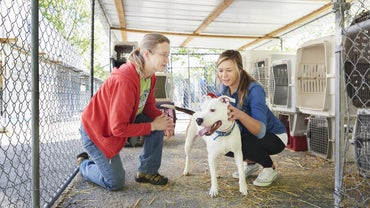 Where Can You Find Information About Local No-Kill Animal Shelters?