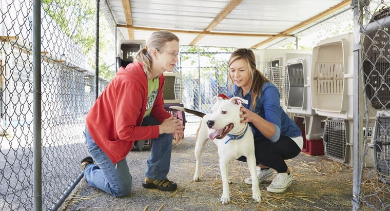 can-information-local-kill-animal-shelters