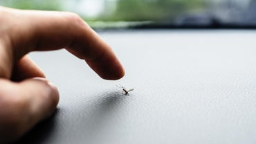 Can You Kill Mosquitoes With Bleach?