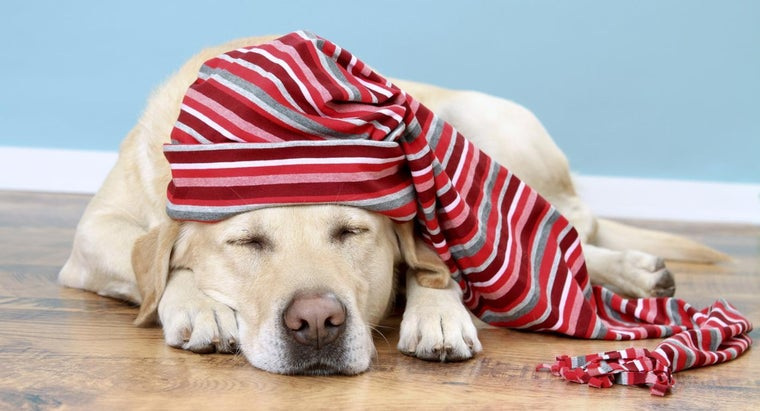 can-leave-dog-alone-overnight