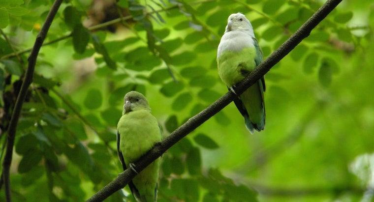 can-lovebirds-talk