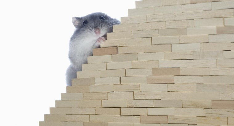 can-mice-climb-stairs