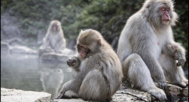 can-monkeys-swim