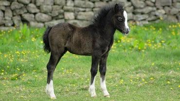 Can a Newborn Horse Walk?