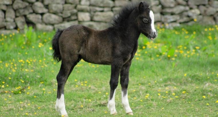 can-newborn-horse-walk
