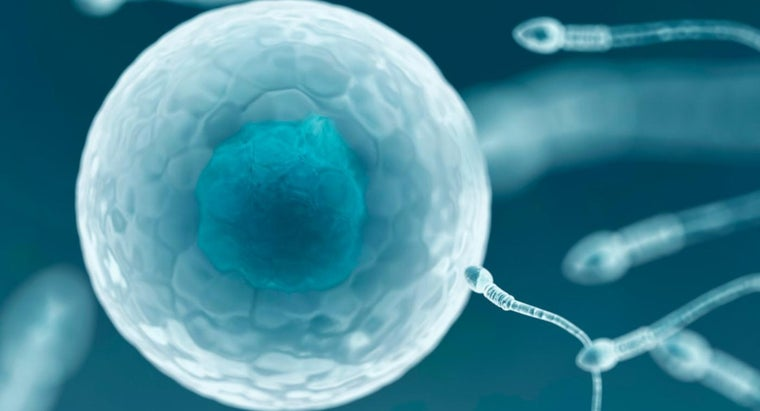 can-only-one-sperm-fertilize-egg