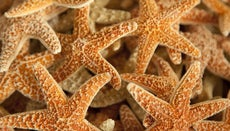 How Can You Preserve a Starfish?