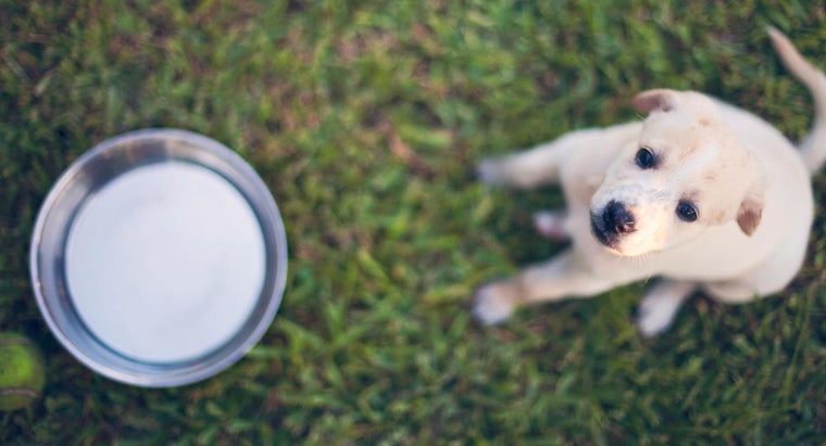 can-puppies-drink-milk